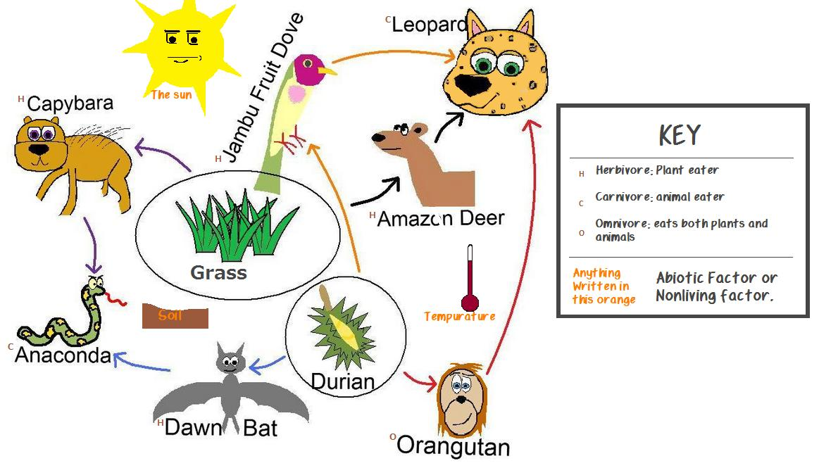 Food Chain For Tropical Rainforest Ecosystem | Food
